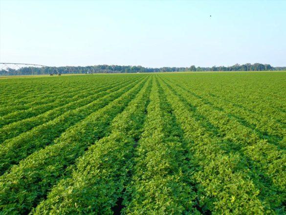 Agriculture Industry Junagadh