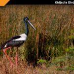 Khijadia Bird Sanctuary Jamnagar