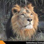 Sakkarbaug Zoological Garden Junagadh