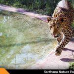Sarthana Nature Park And Zoo Surat