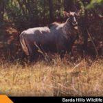 Barda Hills Wildlife Sanctuary Porbandar