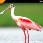 Bird Sanctuary Porbandar