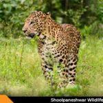 Shoolpaneshwar Wildlife Sanctuary Near Bharuch